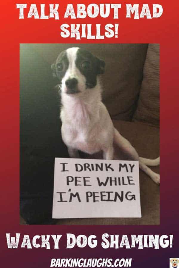 pee drinking dog
