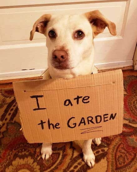 Funny Dog that ate the Garden
