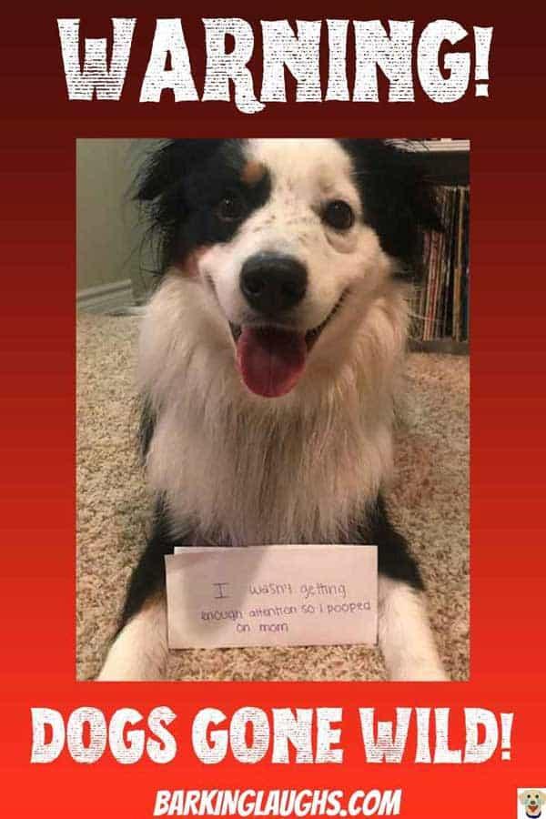 Funny Passive aggressive dog that got back at his human mom.