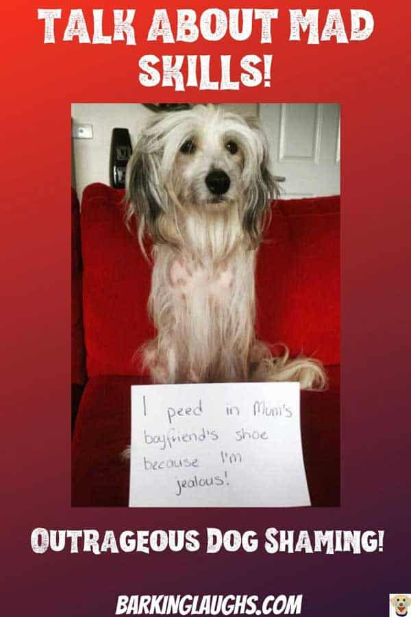 Funny Dog Shaming picture of a dog the pee'd in boyfriend's shoe