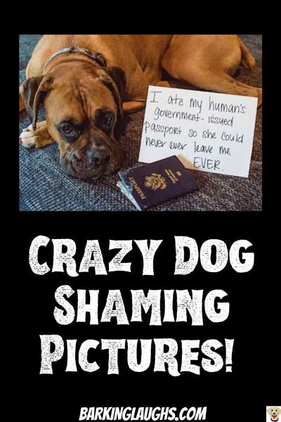 funny dog shaming of a passport eater