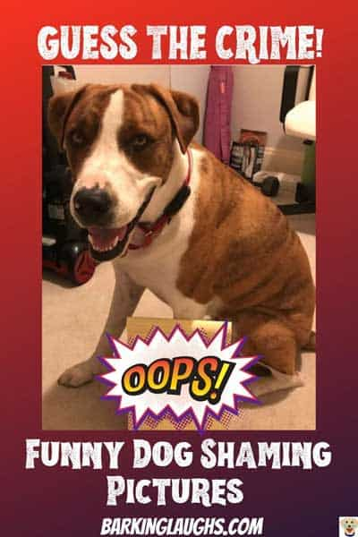 Guess the crime of this funny dog