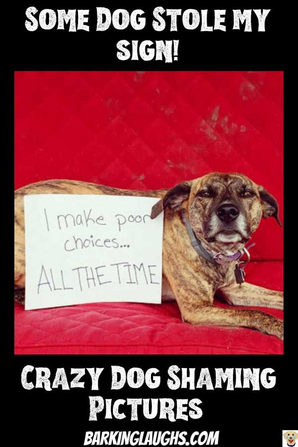 Funny Dog shaming picture