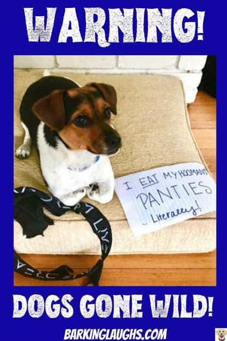 Underwear eating pooch get some dog shaming treatment! Dogs gone Wild!