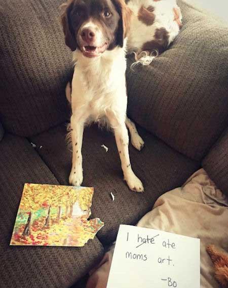 Dog shaming an art eater