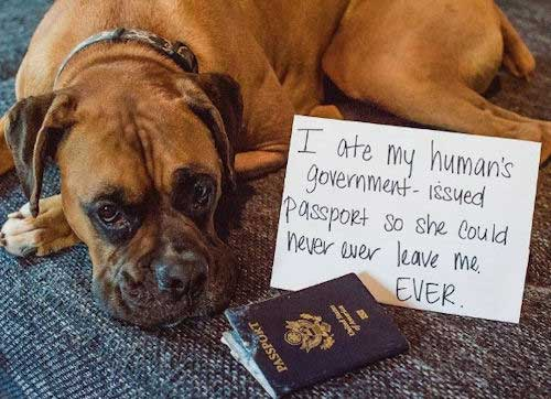Boxer took out the passport
