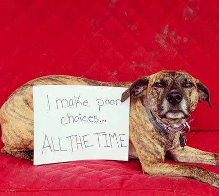Dog shaming picture of a great dog