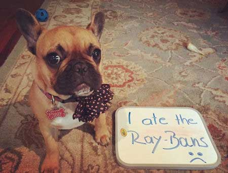 Ray Ban Eater