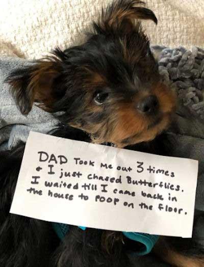 indoor pooper getting dog shamed