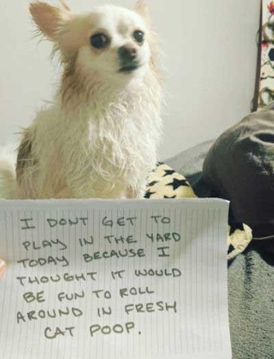 dog shaming of a cat poop roller