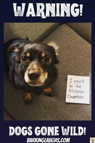 Wow! Funny dog shaming picture of a pooch that does his business on the counter.