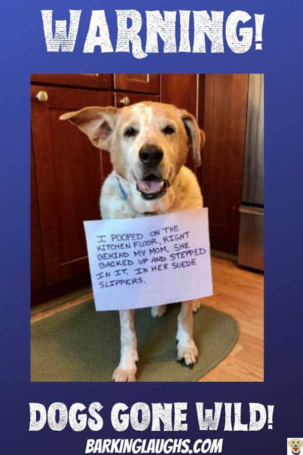Funny Dog Shaming Post. Dog gets up to no good in the kitchen.