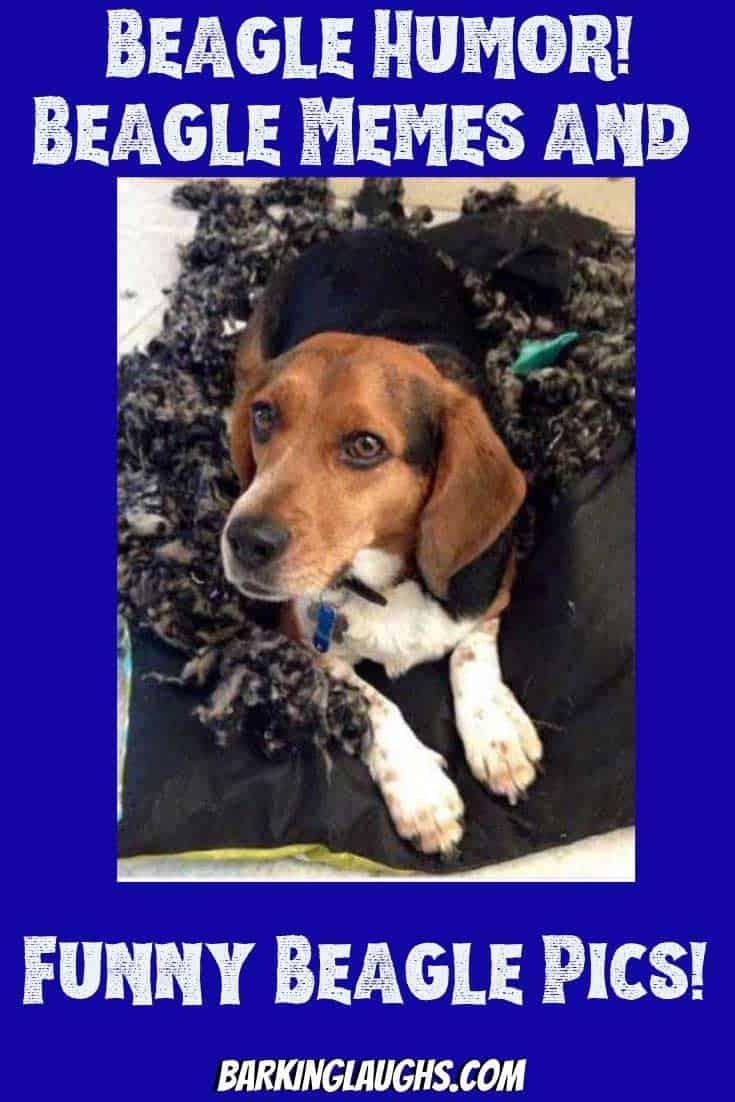 Beagle dog kills a dog bed