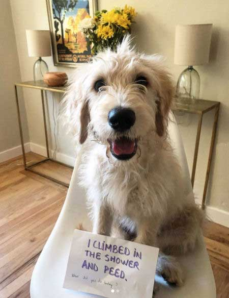 This funny dog belongs on every best of dog shaming list