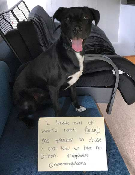 Cat chasing dog bust a screen in this dog shaming funny hilarious picture