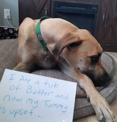 dog ate tub of butter in this dog confession picture