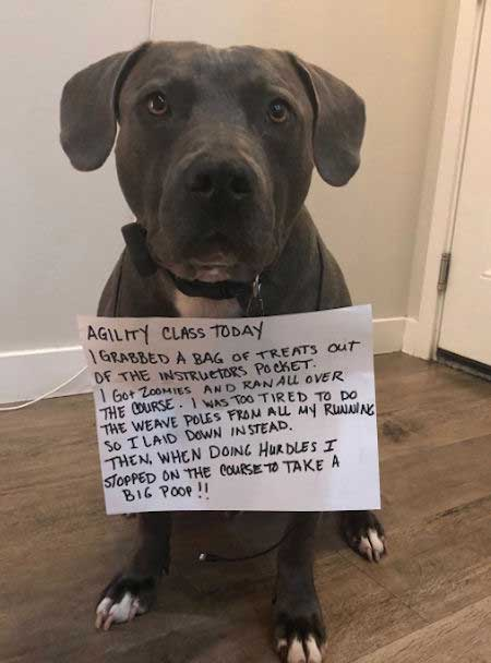 dogs pooping signs of shame are also the best of dog shaming