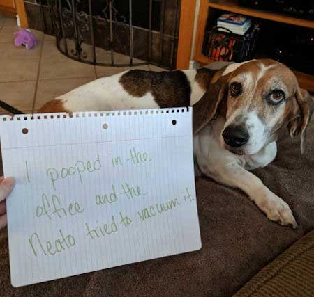 dog shaming new Dogs pooping humor.