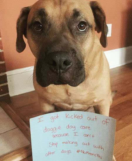 This is a great dog confession of a funny dog that got kicked out of doggie day care.