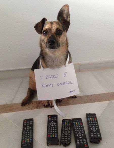 Dog ate five remotes in this funny dog confession