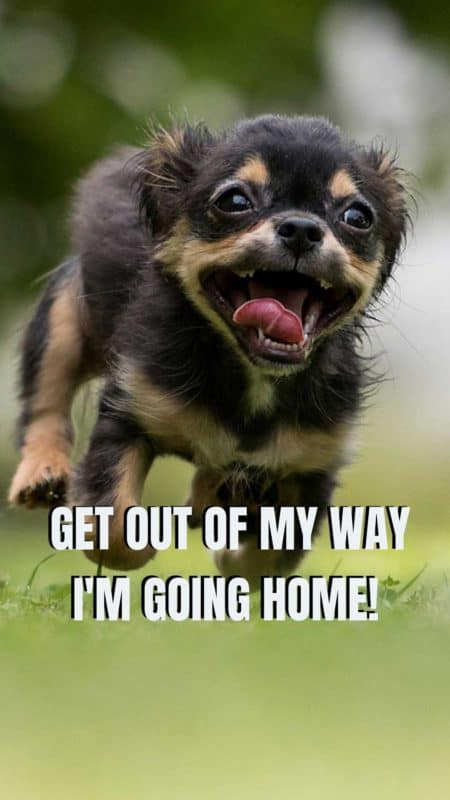 Funny Dog running like a spaz on an android and i phone wallpaper.