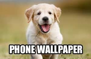 cellphone wall paper puppy social