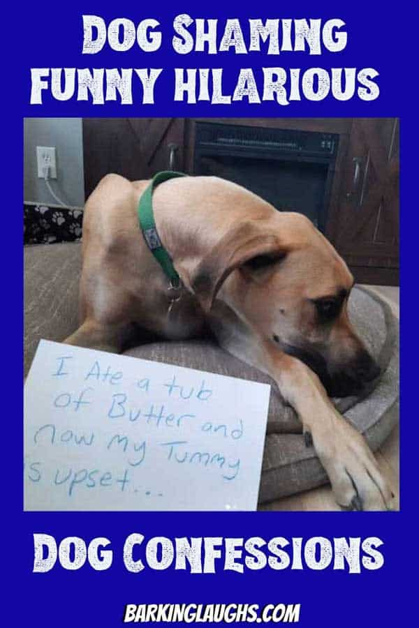 Dog shaming funny hilarious dog confession. Dog ate a tub of butter.