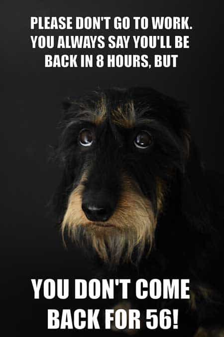 Hilarious memes funny dog picture. Dog looks sad because they are being left alone.