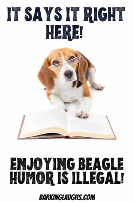 A funny beagle telling you that you are not allowed to enjoy Beagle Humor