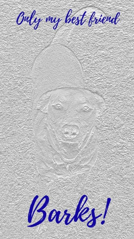 Only my best friend barks. Cool free dog phone wallpaper