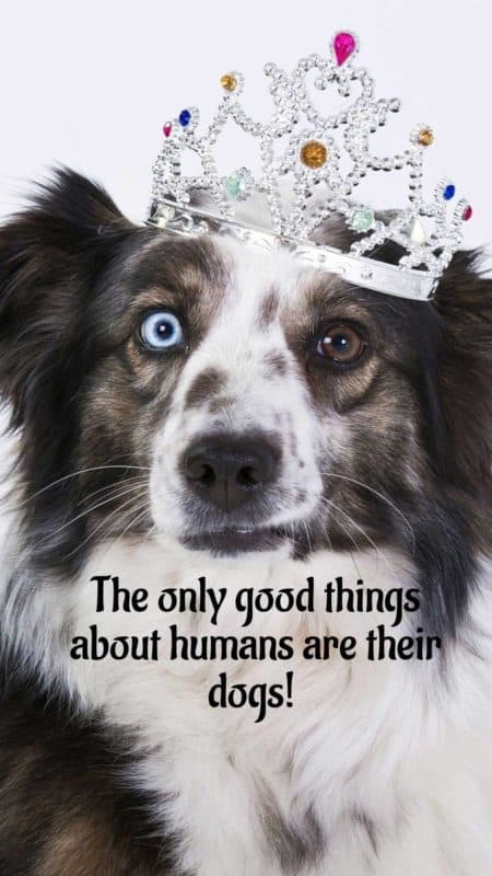 The only good things about humans are their dogs. Free phone wallpapers about dogs.