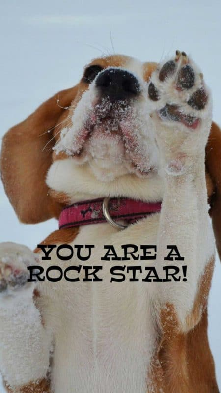 Free Dog wallpaper. You are a rock star!