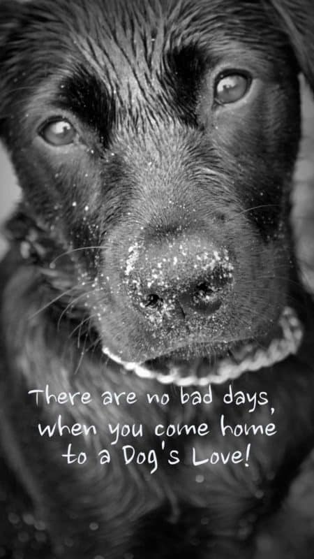 home screen wallpaper for phone. Awesome dog quote.