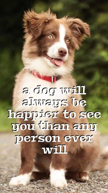 Dog lovers cellphone wallpaper quote