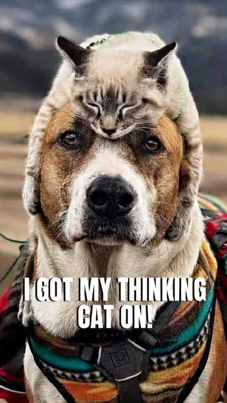 Dog Wallpaper smartphone. Dog with a cat on his head. Dog Memes Hilarious pictures. this dog with captions is hysterical. #barkinglaughs