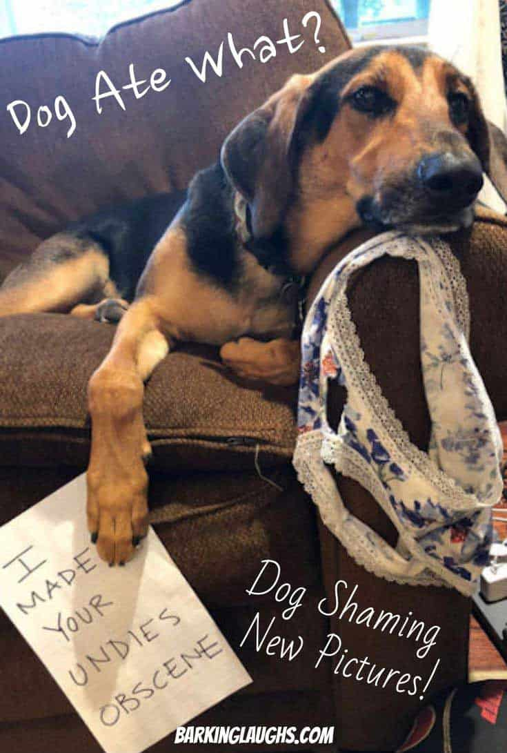 Dog ate underwear