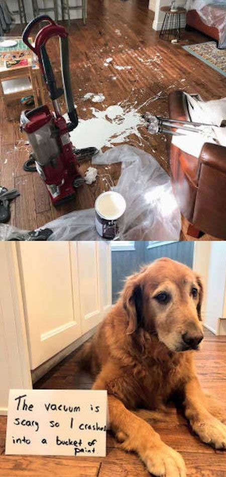 pooch destroys a painting event