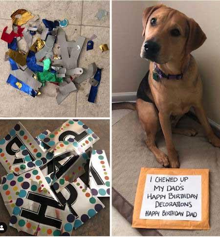pooch destroys birthday decorations