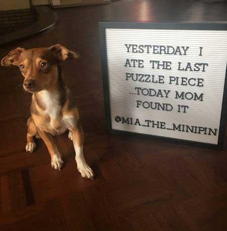 dog ate puzzle piece
