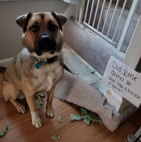 total canine destruction of a house eater