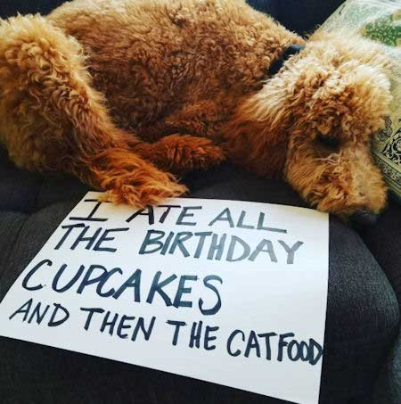 canine eats all the cupcakes