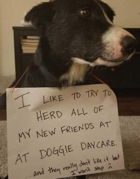 funny doggie daycare pooch