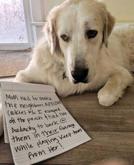 dog confession of a neighborhood stalker