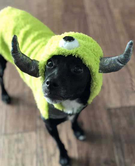 Lab and Jack Russell mixed dog dressed up like Mike from Monsters Inc.