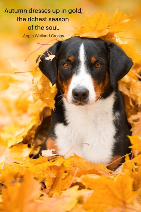 little dog surrounded by leaves with an Angie Weiland-Crosby quote