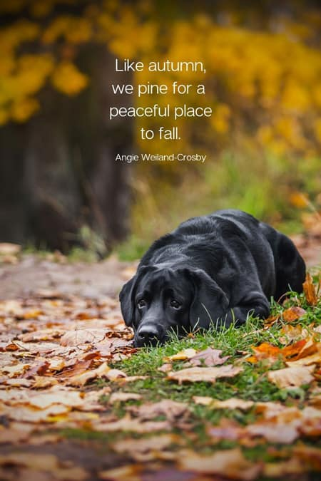 Autumn Quote by Angie Weiland-Crosby with a black lab in the fall time