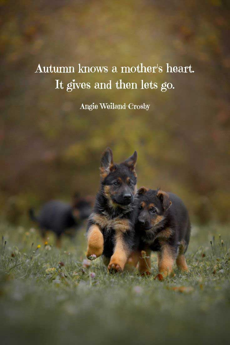 Two German Shepherd puppies running in a field with Weiland-Crosby quote