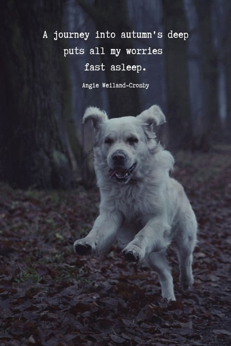 Cool dog running picture with an awesome autumn quote