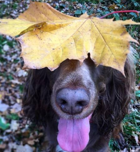 a Sprocket dog with a big leaf on their head