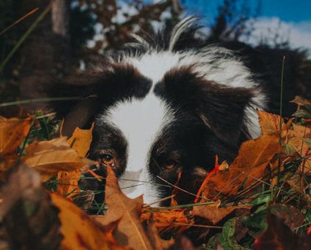 Aussie hiding in the leaves